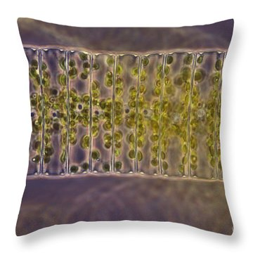 Ulothrix Sp. Algae, Lm Throw Pillow by David M. Phillips