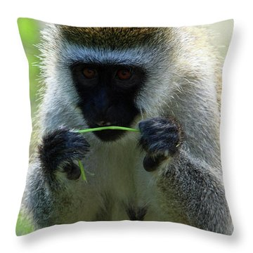 Vervet Monkey Throw Pillow