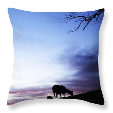 Winter Lambs And Ewes Sunrise Throw Pillow by Thomas R Fletcher