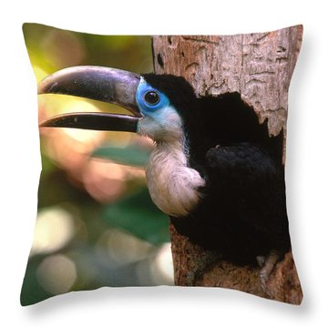Yellow-ridged Toucan Throw Pillow by Art Wolfe
