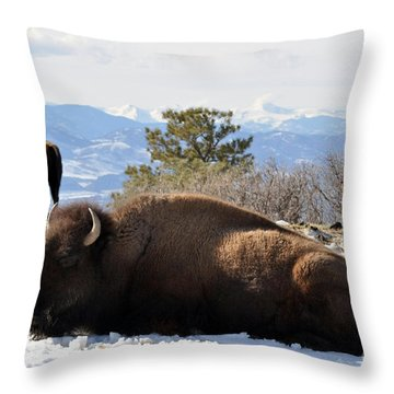 302 Throw Pillow