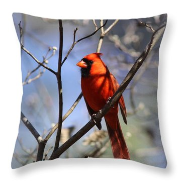 3477-006- Northern Cardinal Throw Pillow