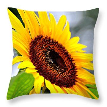 3528 Throw Pillow by Marty Koch