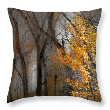 3707 Throw Pillow by Peter Holme III