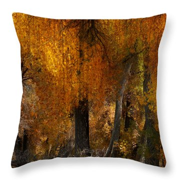 3777 Throw Pillow by Peter Holme III