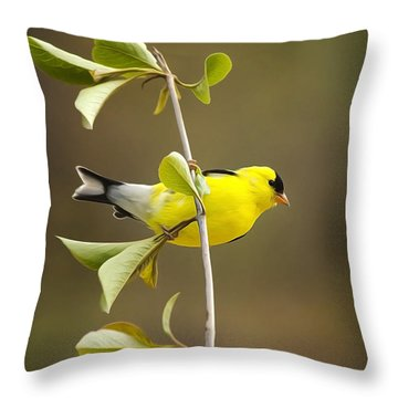 American Goldfinch Throw Pillow by Christina Rollo