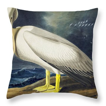 American White Pelican Throw Pillow by Celestial Images