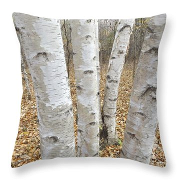 4 Birch Trees Throw Pillow by Erick Schmidt