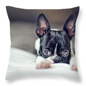 Boston Terrier Throw Pillows