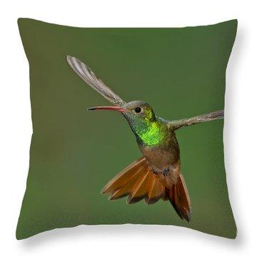Buff-bellied Hummingbird Throw Pillow by Anthony Mercieca
