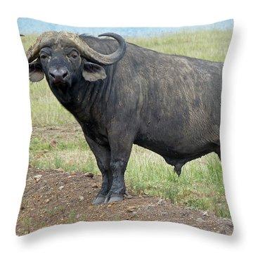 Cape Buffalo Throw Pillow