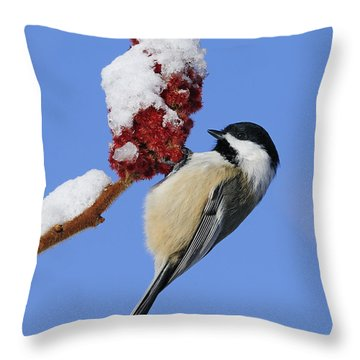 Chickadee Love... Throw Pillow