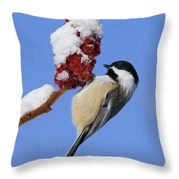 Chickadee Love... Throw Pillow