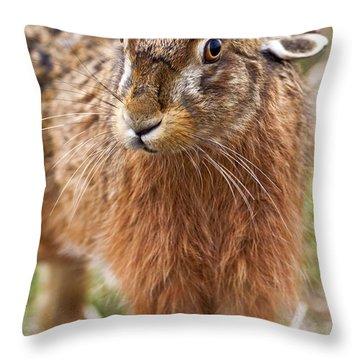 European Hare Throw Pillows