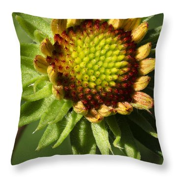 Gaillardia Flower Throw Pillow