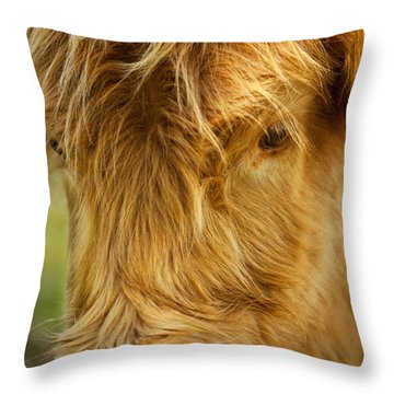 Highland Cow Throw Pillow by Brian Jannsen