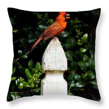 Male Cardinal Throw Pillow