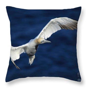 Northern Gannet In Flight Throw Pillow