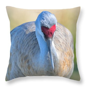 Throw Pillow featuring the photograph Sandhill Crane by Kathy King