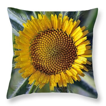 Spring Wild Flower Throw Pillow by George Atsametakis