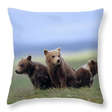 4 Young Brown Bear Cubs Huddled Throw Pillow by Eberhard Brunner
