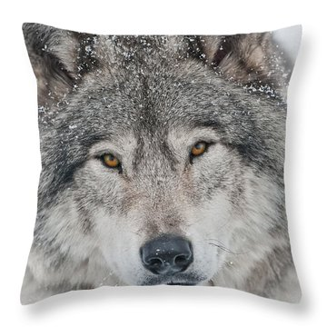 Throw Pillow featuring the photograph Timber Wolf by Michael Cummings
