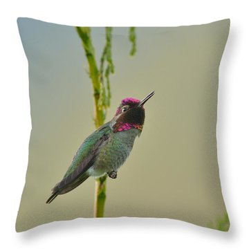 Throw Pillow featuring the photograph Anna's Hummingbird by Kathy King