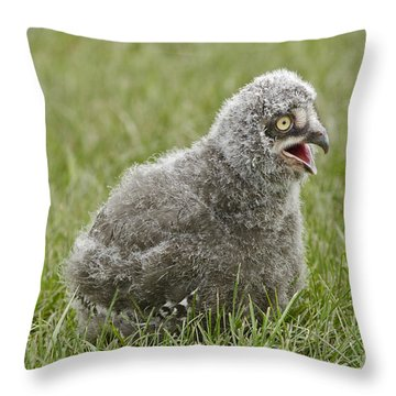 Baby Snowy Owl Throw Pillow