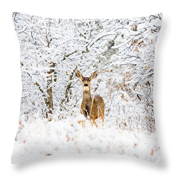 Doe Mule Deer In Snow Throw Pillow