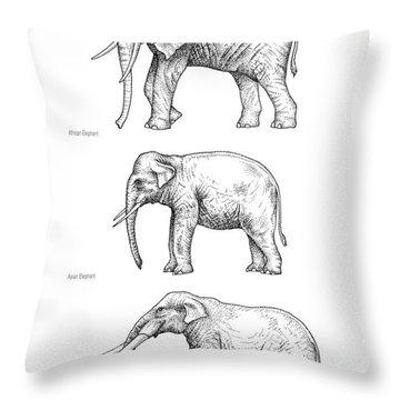 Elephant Evolution, Artwork Throw Pillow by Gary Hincks