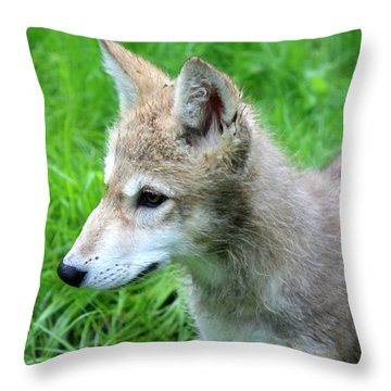 Gray Wolf Pup Throw Pillow