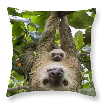 Throw Pillow featuring the photograph Hoffmanns Two-toed Sloth And Old Baby by Suzi Eszterhas