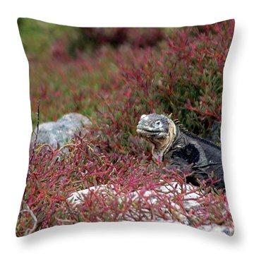 Land Iguana Throw Pillows