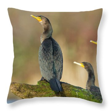 Phalacrocorax Auritus Throw Pillows