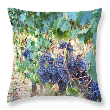 Wine Yards In Loppiano Throw Pillow