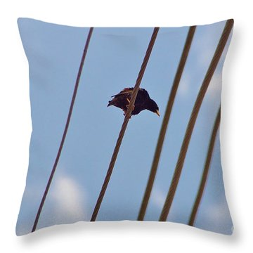 Throw Pillow featuring the photograph 5 Wire by Lynda Dawson-Youngclaus