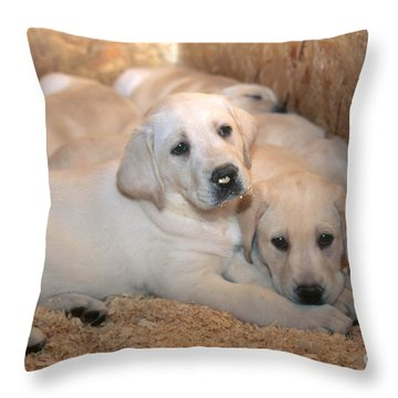 Yellow Labrador Retriever Puppies Throw Pillow by Linda Freshwaters Arndt