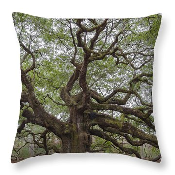 Sc Angel Oak Tree Throw Pillow