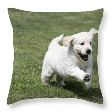 Golden Retriever Puppy Throw Pillow by John Daniels