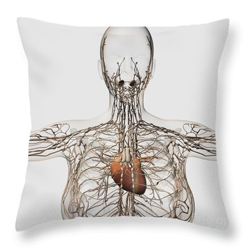 Medical Illustration Of Female Throw Pillow by Stocktrek Images