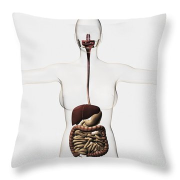 Medical Illustration Of The Human Throw Pillow