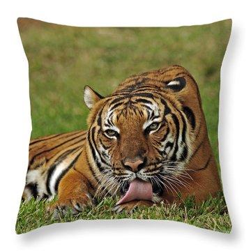 Royal Bengal Tiger Throw Pillow