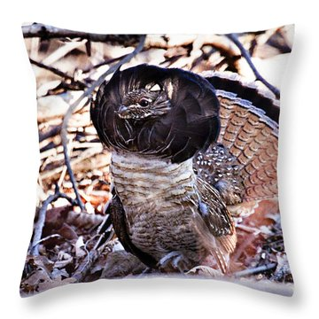 Ruffed Grouse Throw Pillow by Ronald Lutz
