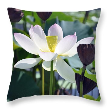 Water Lily Throw Pillow by Dottie Branchreeves