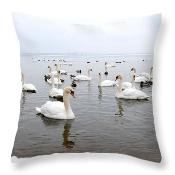 60 Swans A Swimming Throw Pillow
