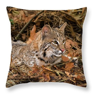 611000006 Bobcat Felis Rufus Wildlife Rescue Throw Pillow by Dave Welling