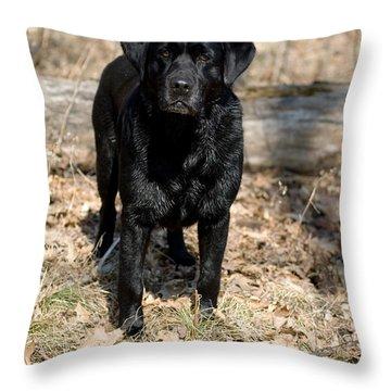 Black Labrador Retriever Throw Pillow by Linda Freshwaters Arndt