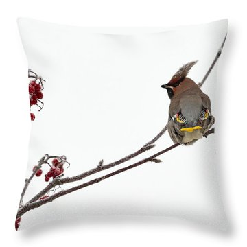 Bohemian Waxwings Eating Rowan Berries Throw Pillow by Jouko Lehto
