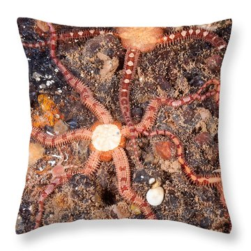 Daisy Brittle Star Throw Pillow