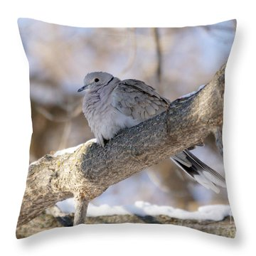 Euarsian Collard Dove Throw Pillow by Lori Tordsen